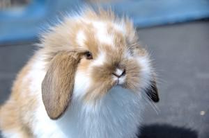 Maden bei Kaninchen
