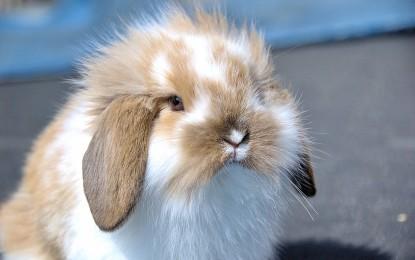 Maden bei Kaninchen – vorbeugen und behandeln