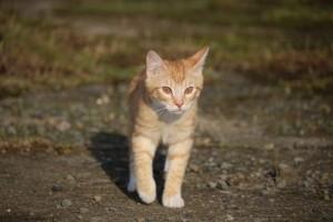 junge Katze zu alter Katze