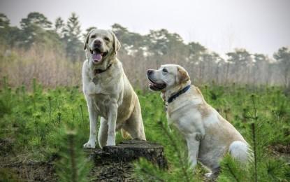 blog hund schlaeft viel moegliche gruende