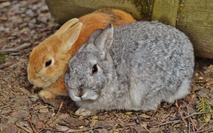 Kaninchenschnupfen – das steckt dahinter