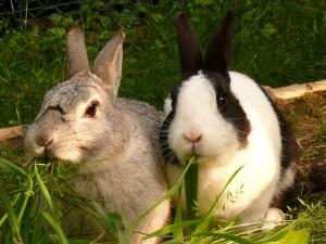 Abkuehlung fuer Kaninchen