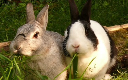 Abkühlung für Kaninchen im Sommer