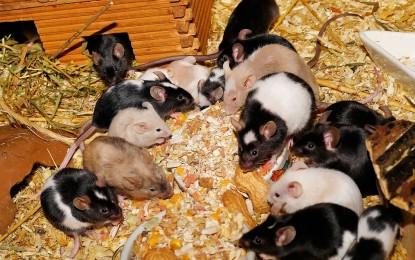 Mäusenamen – indische und indianische Namensideen
