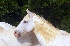 Pferdebuecher