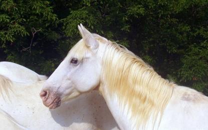 Die 5 besten Bücher rund um die Pferdegesundheit