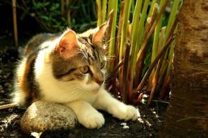 Schneckenkorn giftig fuer Katzen