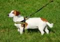 Hund zieht an der Leine – was tun?