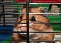 Käfigeinrichtung für Hamster – 5 Gefahren