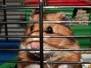 Käfigeinrichtung für Hamster