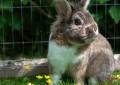 Kaninchen hat Blähungen – was tun?