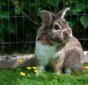 Kaninchen hat Blaehungen