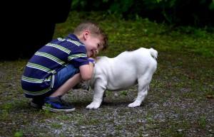 kinderliebe Hunderassen