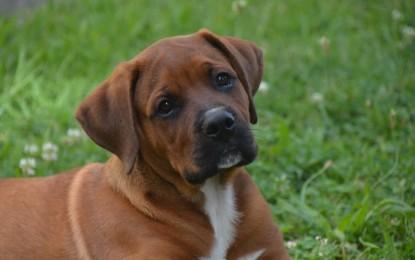 Hunde ausleihen – 3 Möglichkeiten
