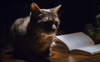Die 5 schönsten Katzenbücher