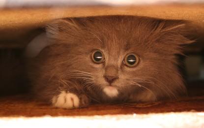 Katzenklo verstecken – 3 Ideen