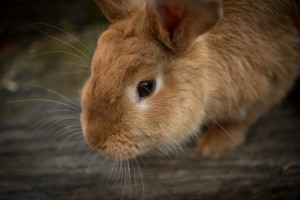 Weihnachtsgeschenk fuer Kaninchenhalter
