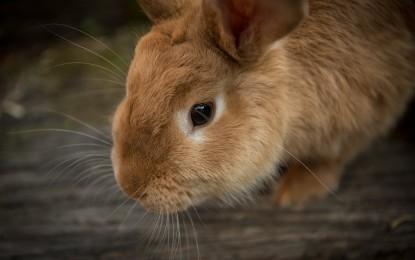 Weihnachtsgeschenk für Kaninchenhalter – 5 Ideen