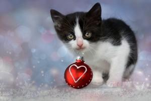 Weihnachtsgeschenk fuer Katzenhalter