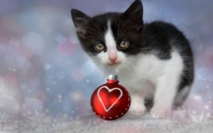 Weihnachtsgeschenk für Katzenhalter – 5 Ideen
