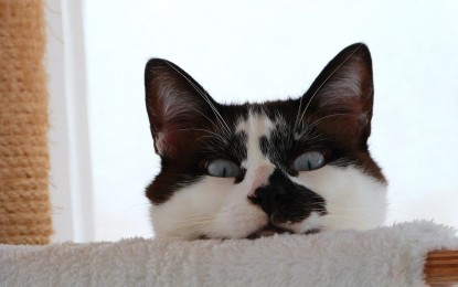 Wie kann man gutes Katzenfutter erkennen?