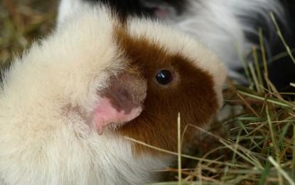 Kleine Haustiere – tierische Mitbewohner für die Mietwohnung