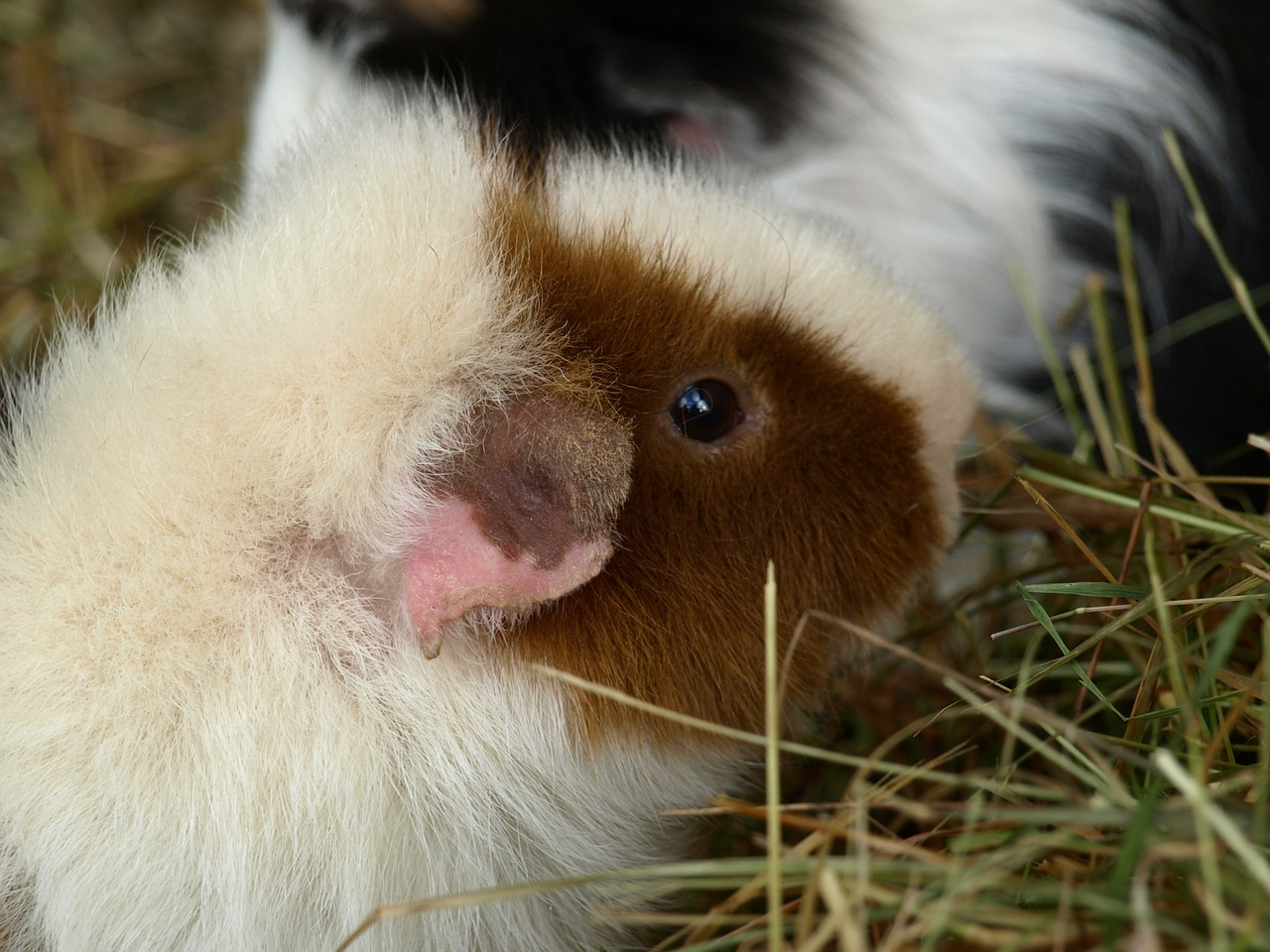 kleine haustiere tierische mitbewohner f r die