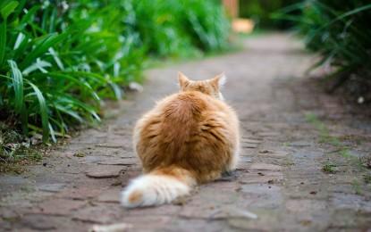 Katze Schwanz gebrochen – was tun?