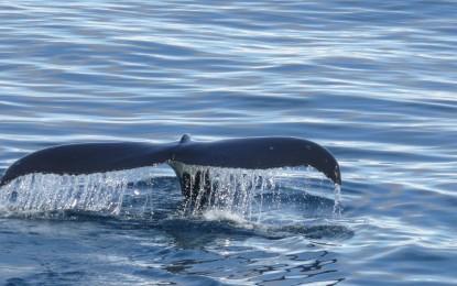 Südpol – Tiere, die dort leben