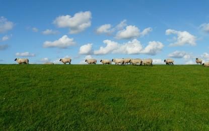 Was essen Schafe?