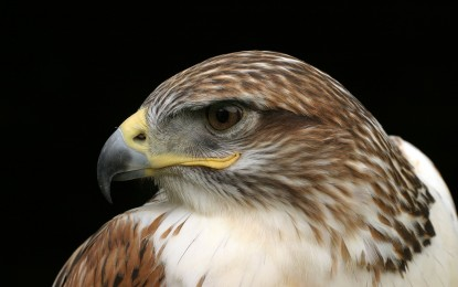 Greifvögel und Eulen – Unterschiede