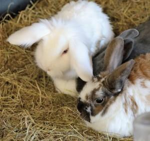 Kaninchenzimmer einrichten