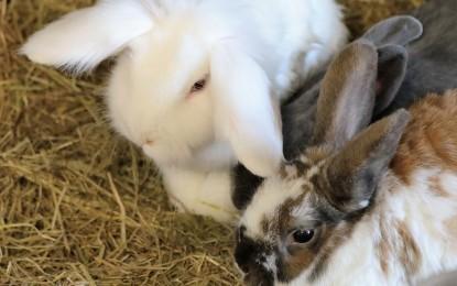 Kaninchenzimmer einrichten – Ideen
