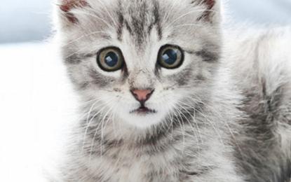 Eine Katze zieht ein – wichtige Hinweise zur Erstausstattung