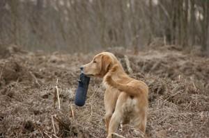 Futterdummy fuer Hunde