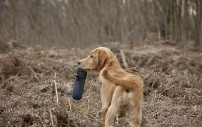 Futterdummy für Hunde
