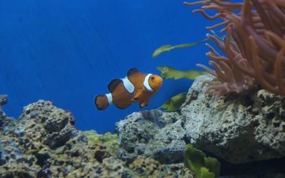 Grundlagen der Meerwasseraquaristik – Mythen und Fakten