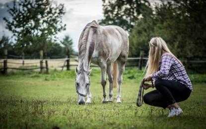 Pferde beschäftigen – 5 Ideen