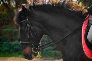 Pferdegebisse