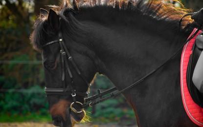 Pferdegebisse im Überblick