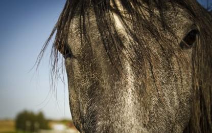Schöne Pferdefilme im Überblick