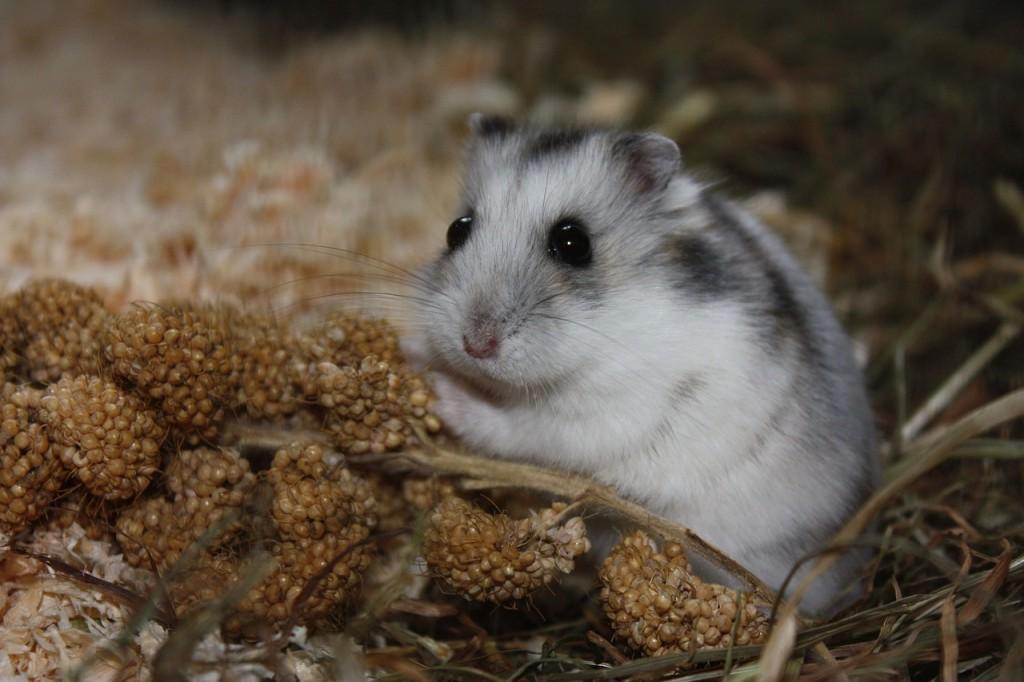 Hamsterkaefig stinkt