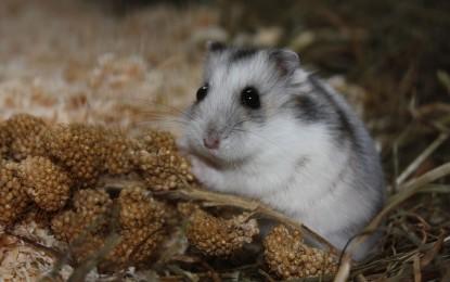 Hamsterkäfig stinkt – was tun?