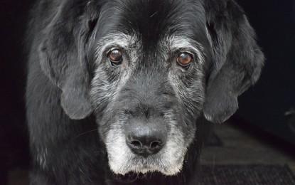 Hundekrankheiten – die 3 häufigsten und ihre Symptome