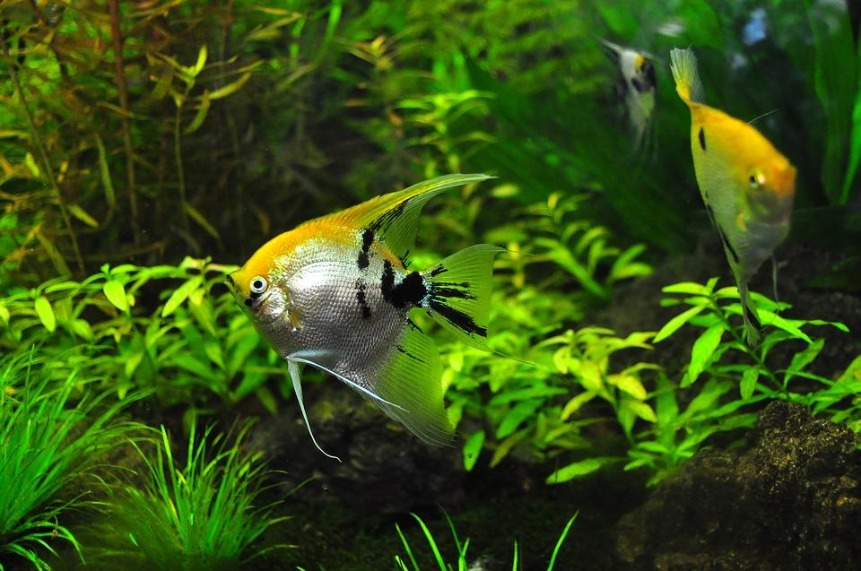 Lebendfutter fuer Aquarienfische