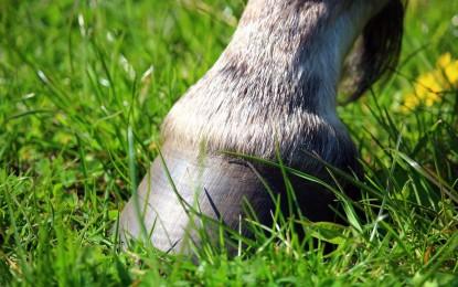8 Dinge, die ihr über den Pferdehuf wissen solltet