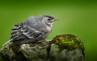 Garten vogelfreundlich gestalten – 6 Tipps