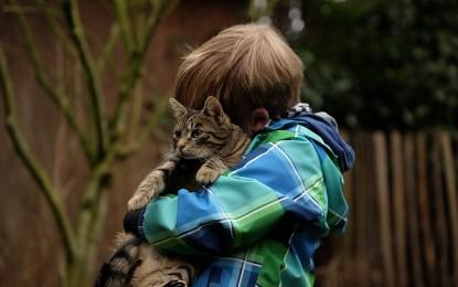 Haustiere für Kinder: welches Tier ist die beste Wahl?