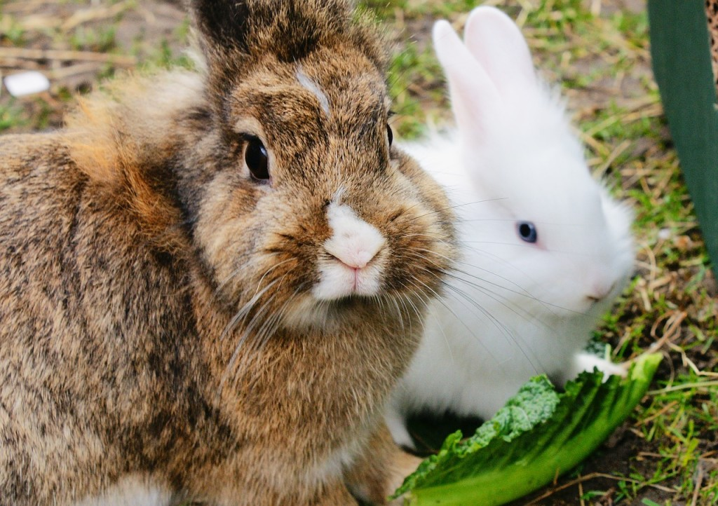 Kaninchen vor Raubtieren schützen - Haustiere-Lexikon.com