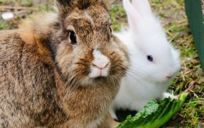 Kaninchen vor Raubtieren schützen